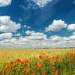 Red poppies on field under deep blue sky — Стоковая фотография