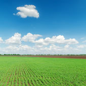 Agriculture green field and clouds over it — Stock Photo