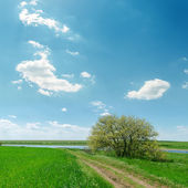 Road in green grass near tree and blue sky with clouds — Stock Photo