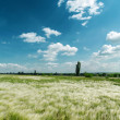 Green mat grass and blue sky — Photo