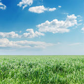 Cloudy sky over green field — Stock Photo