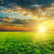 Agriculture green field and sunset — Foto Stock