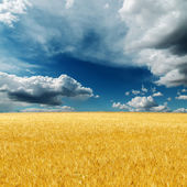 Dramatic sky over field with golden harvest — Stock Photo