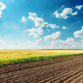 Agriculture fields under deep blue cloudy sky — Stock Photo