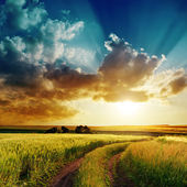 Dramatic sunset over rural road in green field — Stock Photo