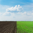 Two agriculture fields under cloudy sky — Stock Photo