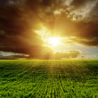 Sunset over green agricultural field — Stock Photo