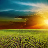 Orange sunset over green field — Stock Photo