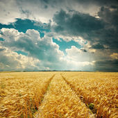 Harvest field with track and low clouds over it — Stock Photo