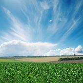 Wiatr w chmury na zielone pole — Zdjęcie stockowe