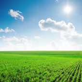 Sun in blue sky with clouds and green field — Stock Photo