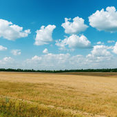 Agriculture field after harvesting and clouds over it — Stock Photo