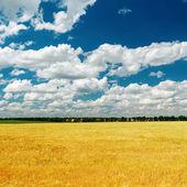 Altın alan üzerinde mavi dramatik gökyüzü — Stok fotoğraf