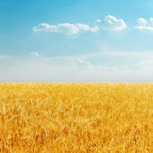 Golden field with harvest and cloudy sky — Stock Photo