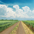 Cloudy sky over road in green field — Stock Photo