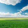 Stock Photo: Agriculture green field and clouds over it