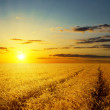 Sunset over agricultural field — Stock Photo #40498423