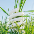 图库照片: White eco bulb in green grass