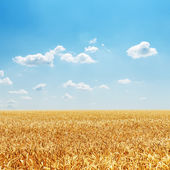 Field with golden harvest and cloudy sky — Stok fotoğraf