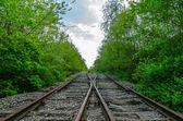 Crossing of two railroads in wood — Stok fotoğraf