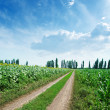 Rural road in green fields and blue cloudy sky — Stock Photo