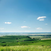 View to vineyard and blue sky — Stock Photo