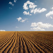 Plowed field and blue sky in sunset — Stock Photo