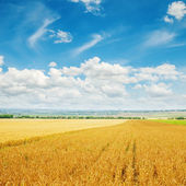 Cloudy sky over golden field with barley — Stock Photo