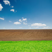 Green grass and black plowed fields under blue sky — Stock Photo