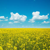 Yellow field with rape and clouds in blue sky — Stock Photo