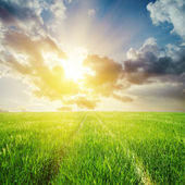 Green field and sunset in clouds — Stock Photo