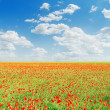 Red poppies field and blue cloudy sky — Stock Photo #48195137