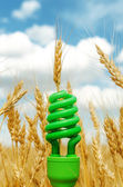 Green eco bulb in field with harvest — Stock Photo