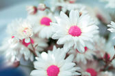 Closeup of white flowers with soft focus — Stock Photo