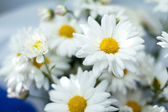 Closeup of white camomile flower with soft focus — Stock Photo