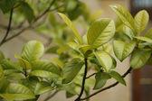 Hojas verdes frescas. naturaleza — Foto de Stock