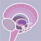 Brain Nervous System vector — Stock Vector