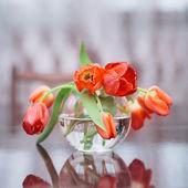 Tulpen in glasvase — Stockfoto