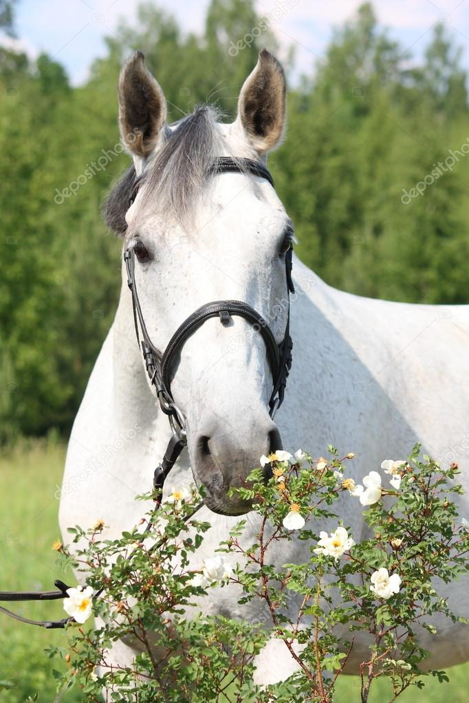 cute horses and ponies
