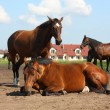 Brown horse lying on the ground — Stock Photo