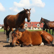 Brown horse lying on the ground — Stock Photo #18143023
