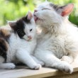 Mother cat washing her kitten — Stock Photo #18247131