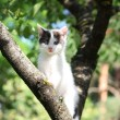 Small cute kitten climbing the tree - Stock Photo