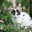 Kitten sitting in the flower bed - Stock Photo