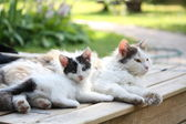 Adorable kitten resting with his mother — Foto Stock