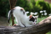 Small white kitten scratching tree branch — Stock Photo