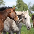 Two horses portrait - Stock Photo
