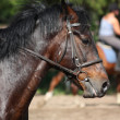 Bay horse with bridle portrait — Stock Photo #20950515