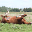 Happy horse rolling in the grass — Lizenzfreies Foto