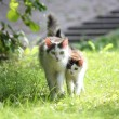 Stock Photo: Cat with her kitten walking together in the garden